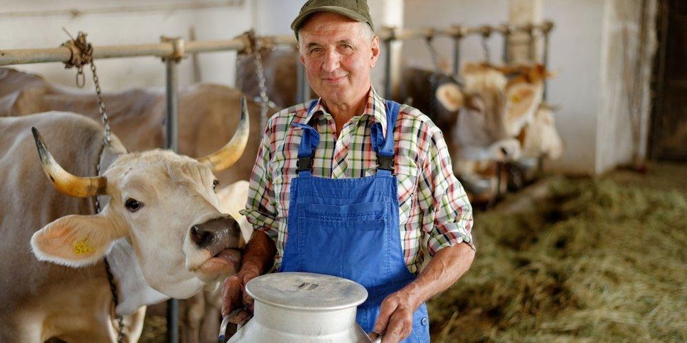 Milchbauer mit Milchkanne in der Hand und stehet im Kuhstall neben einer Kuh