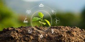 Keimling der aus der Erde blüht und drum herum als Piktogramm die Nachhaltigkeitskette