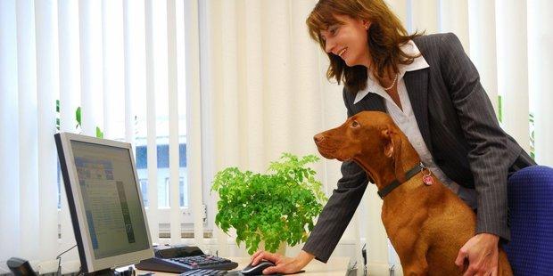 Frau mit Hund am Arbeitsplatz