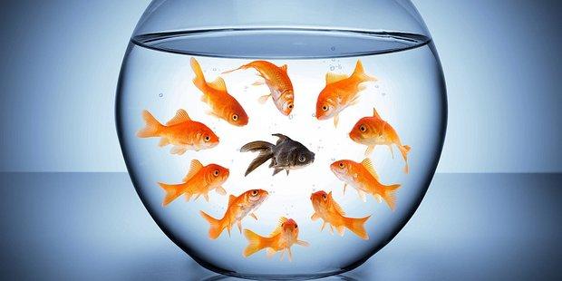 Mehrere Goldfische in einem Glas, einer hat eine andere Farbe