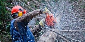 Waldarbeiter sägt Baumstamm
