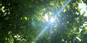 Baum in Sonne
