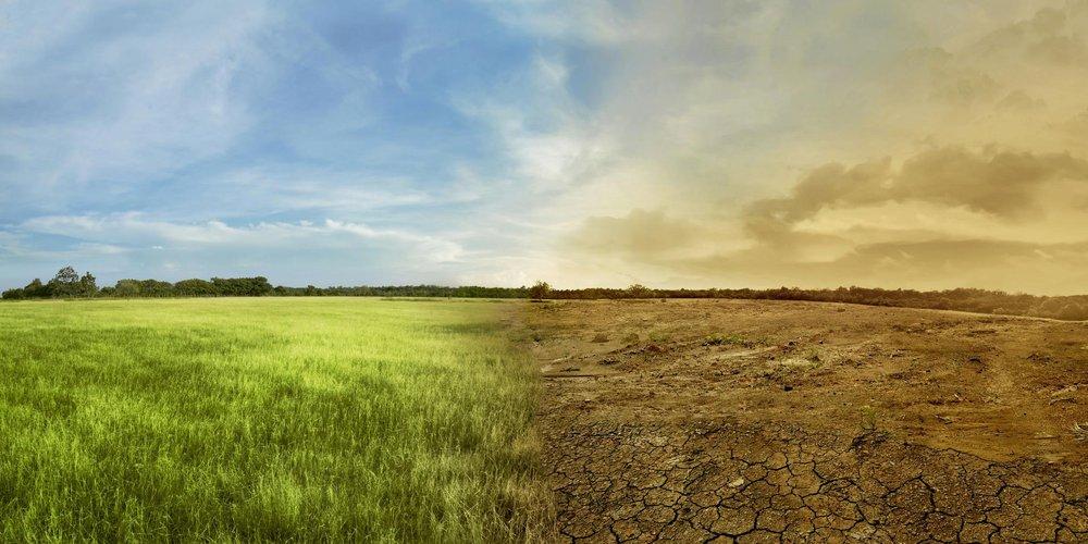 Landschaft mit Wiesenfeld auf der linken Seite und ausgedürrtem Brachland auf der rechten Seite