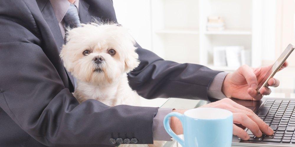 Kleiner Hund mit Herrchen am Arbeitsplatz
