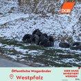 Autoreifen am Wegesrand in der Westpfalz