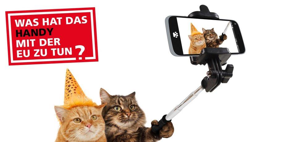 Katzen mit Selfiestick und Smartphone